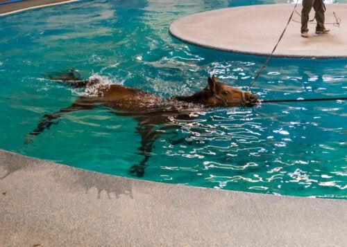 A horse in a pool.