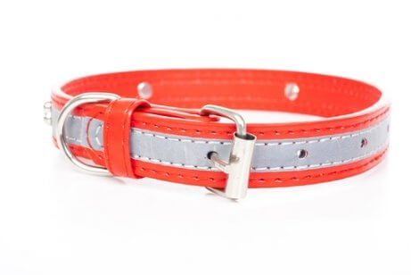 A light-up collar for stray dogs.