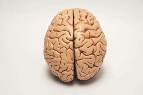 The brain hemispheres are responsible for laterality.
