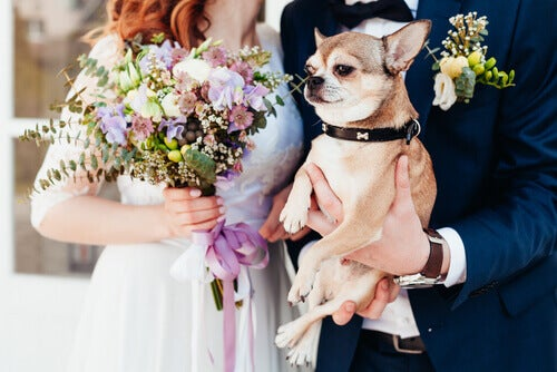 A wedding couple holding their dog.