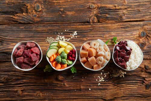 The Importance of Proper Nutrition in Pets