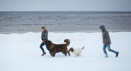 People playing with their dogs in the snow.
