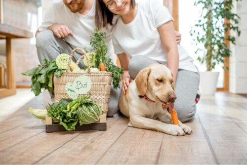 Two people, a dog, and a bag of vegetables.