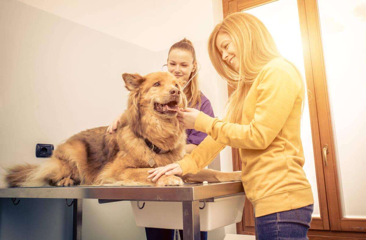A dog on a vet exam table.
