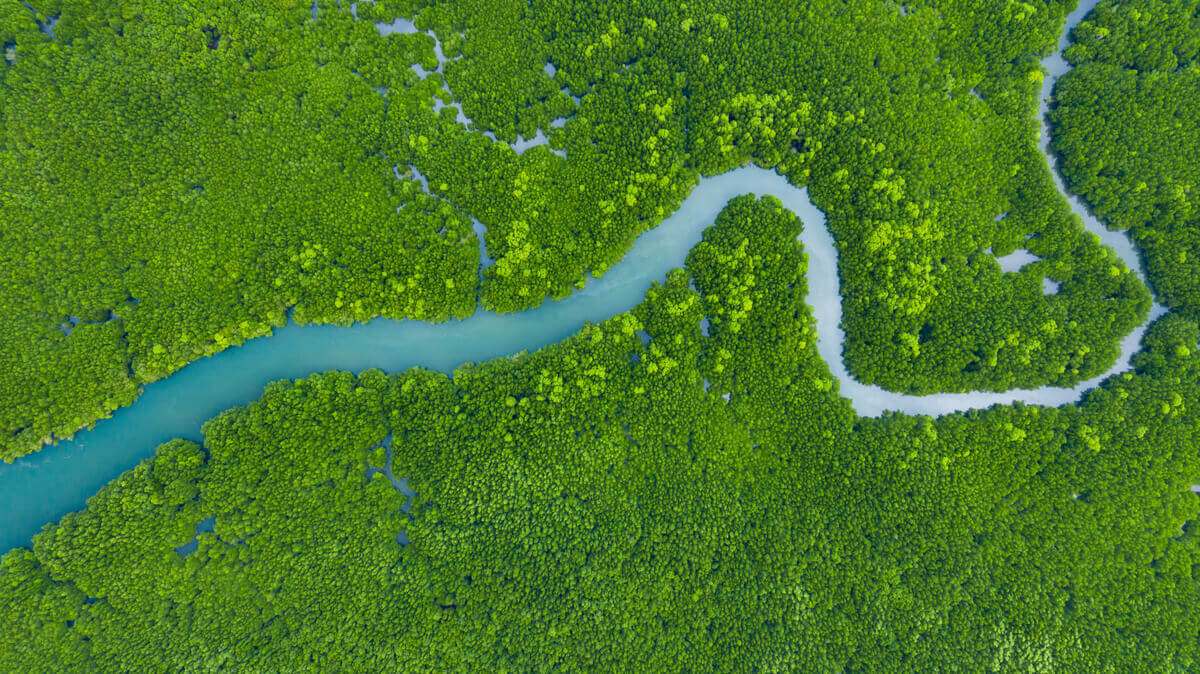 The Amazon River cutting through the rain forest.