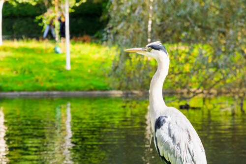 A heron near the river.