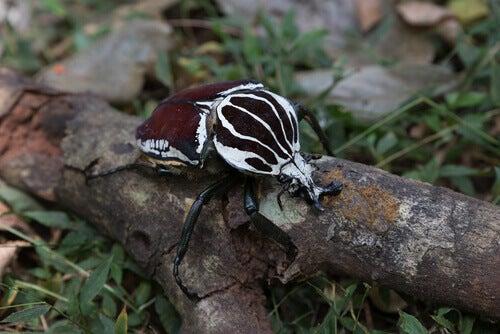 Characteristics of beetles.