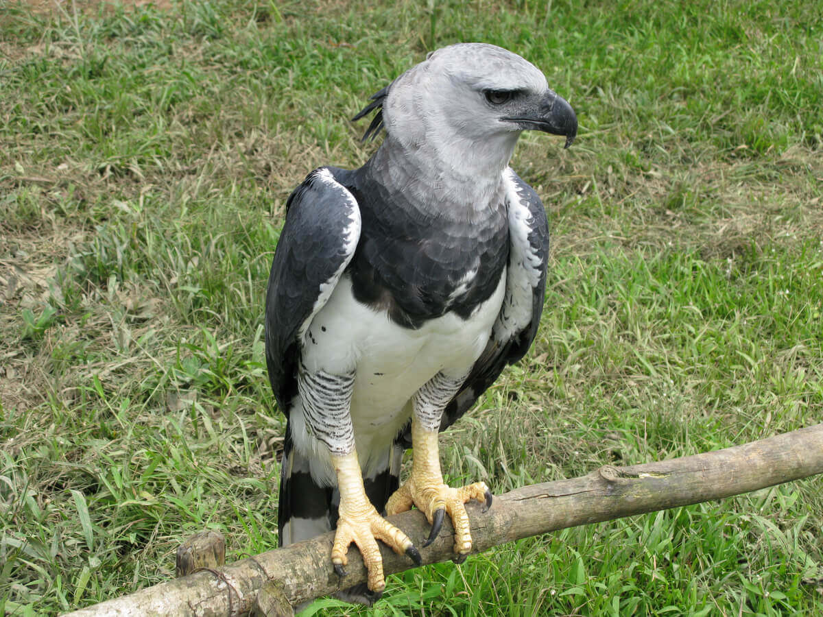 A full-body harpy bird.