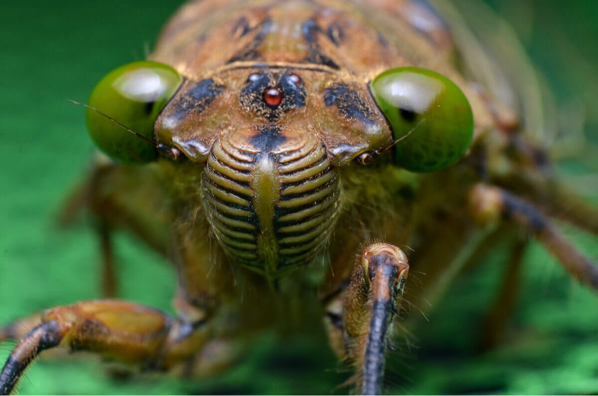 The face of a cicada.