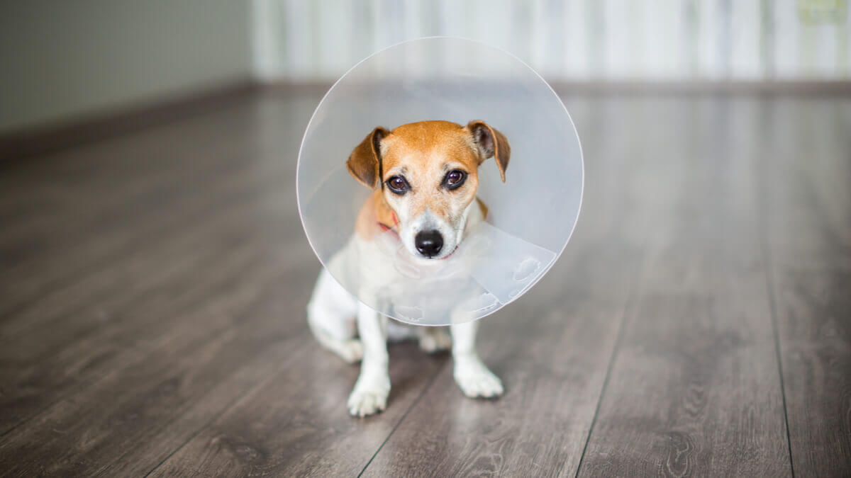 A dog wearing a cone.