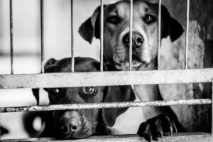 A pet dog leaning on a fence in a black-and-white image.