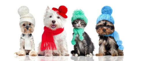 Dogs with scarves and hats.