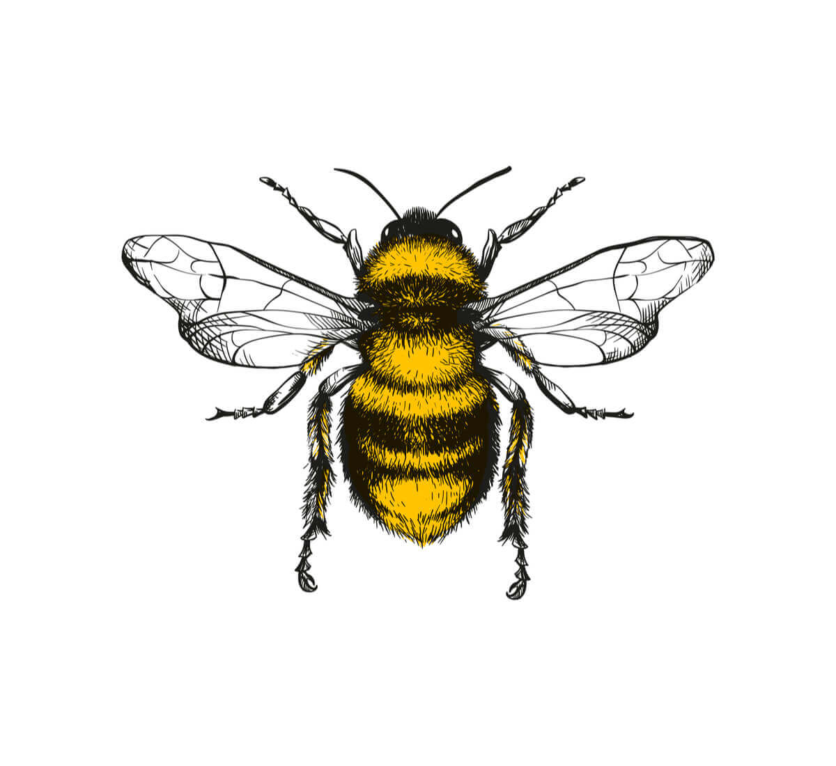 A drawing of a bee.