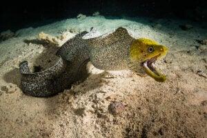 An eel.