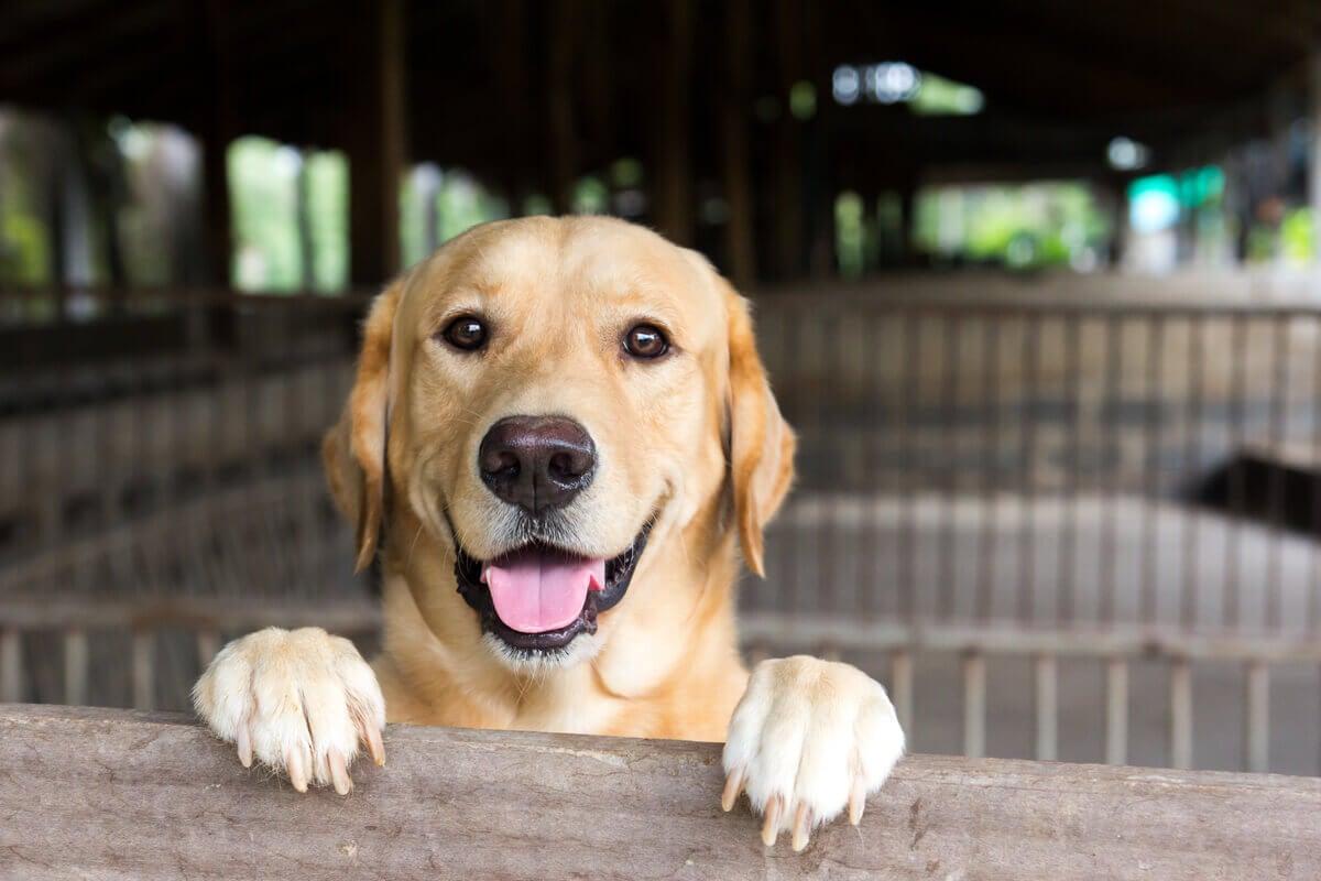 Dog happy to return home.