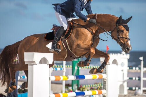 Discover These 9 Equestrian Sports