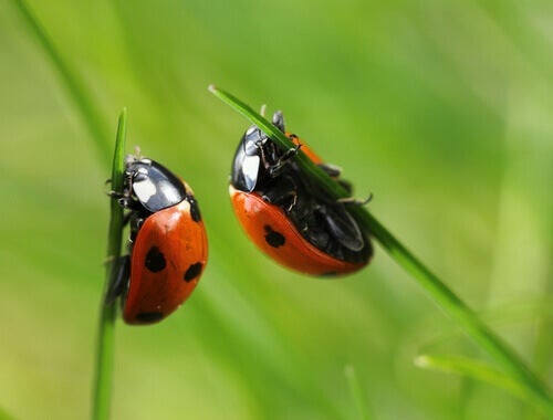 Ladybugs are a type of beetle.