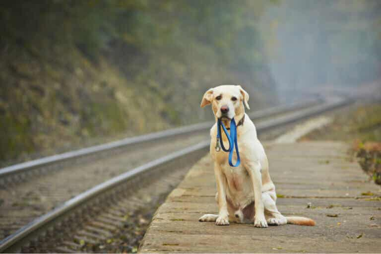 Lost Dog Walked 50 Miles to Return Home