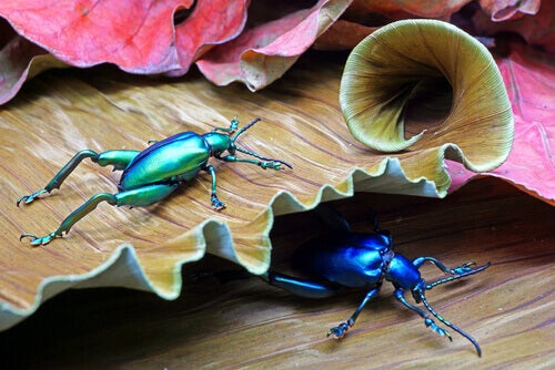 6 Fascinating Beetle Species to Amaze You