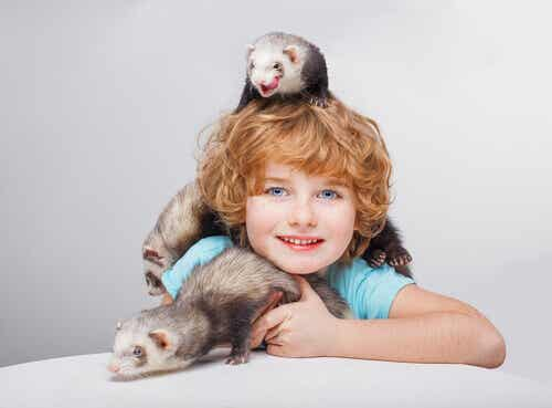 Tips for Playing with Your Ferret