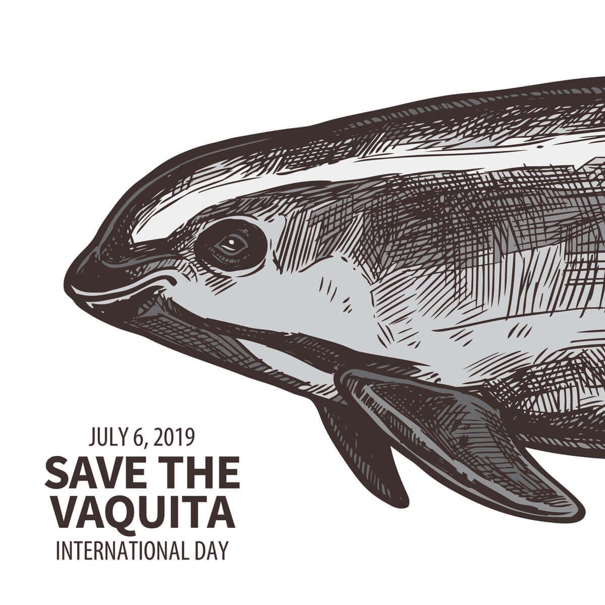 Save the vaquita.