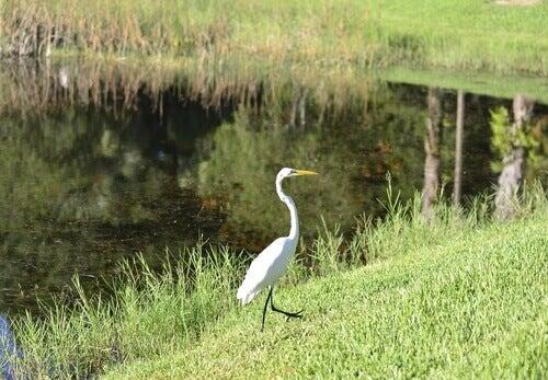 The habitat of the stork.