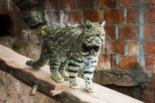 A cat on a log.