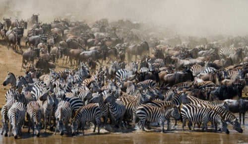 All About Migratory Animals