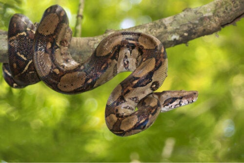 A snake wrapped around a branch.
