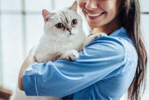 A cat at the vet for feline leukemia.