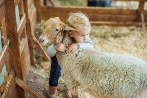 A child hugging a sheep.