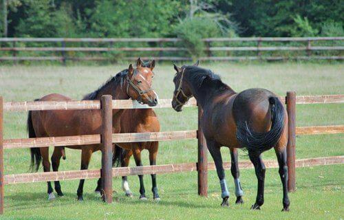 Body language in horses.