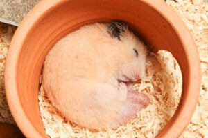 Hamsters can go into hibernation.