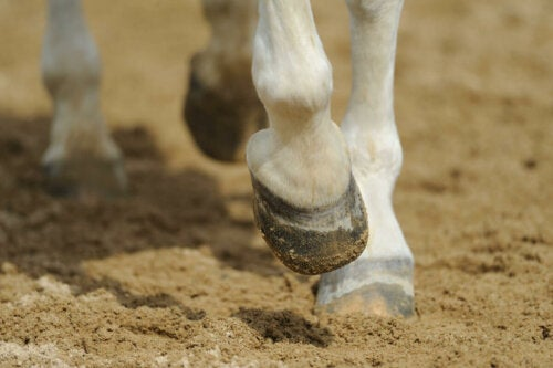 A horse's hoof hitting the ground.