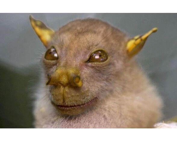 The Yoda bat.