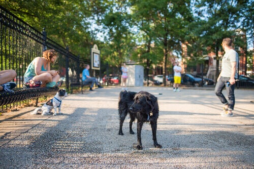 When you take your dog to the park, you must check if the park is clean and safe.