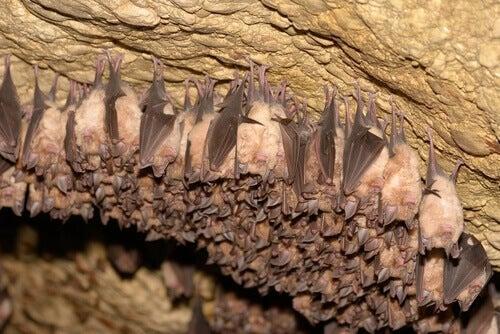 Bats sleeping in a cave.