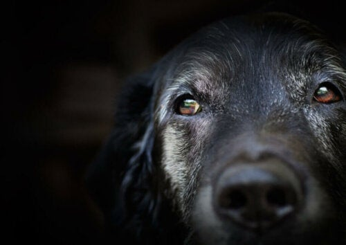 Senile Dementia in Dogs: What Does Science Say?