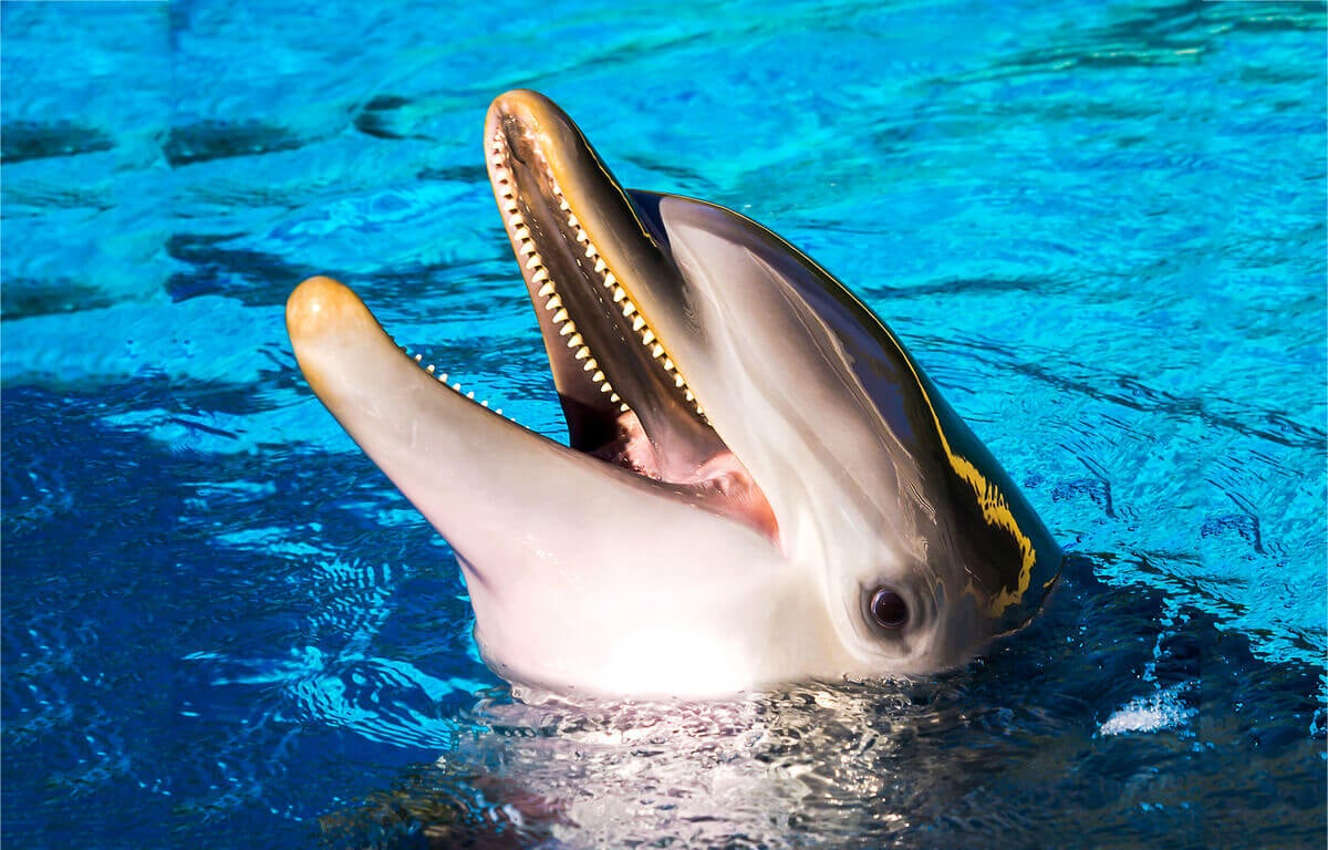 An dolphin with its head out of the water, smiling.