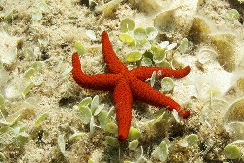 A starfish on a rock.