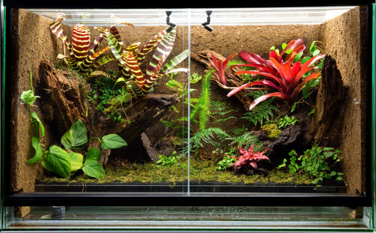 A terrarium full of exotic plants.