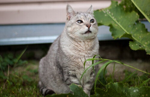 A gray cat sitting in the grass.