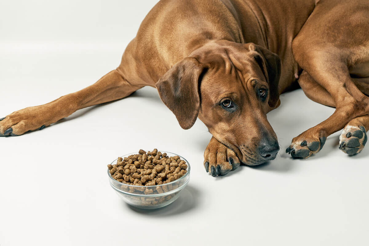 A brown dog lying next to a full bowl of food, looking sad.