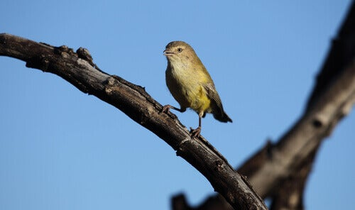 A small bird on a branch.