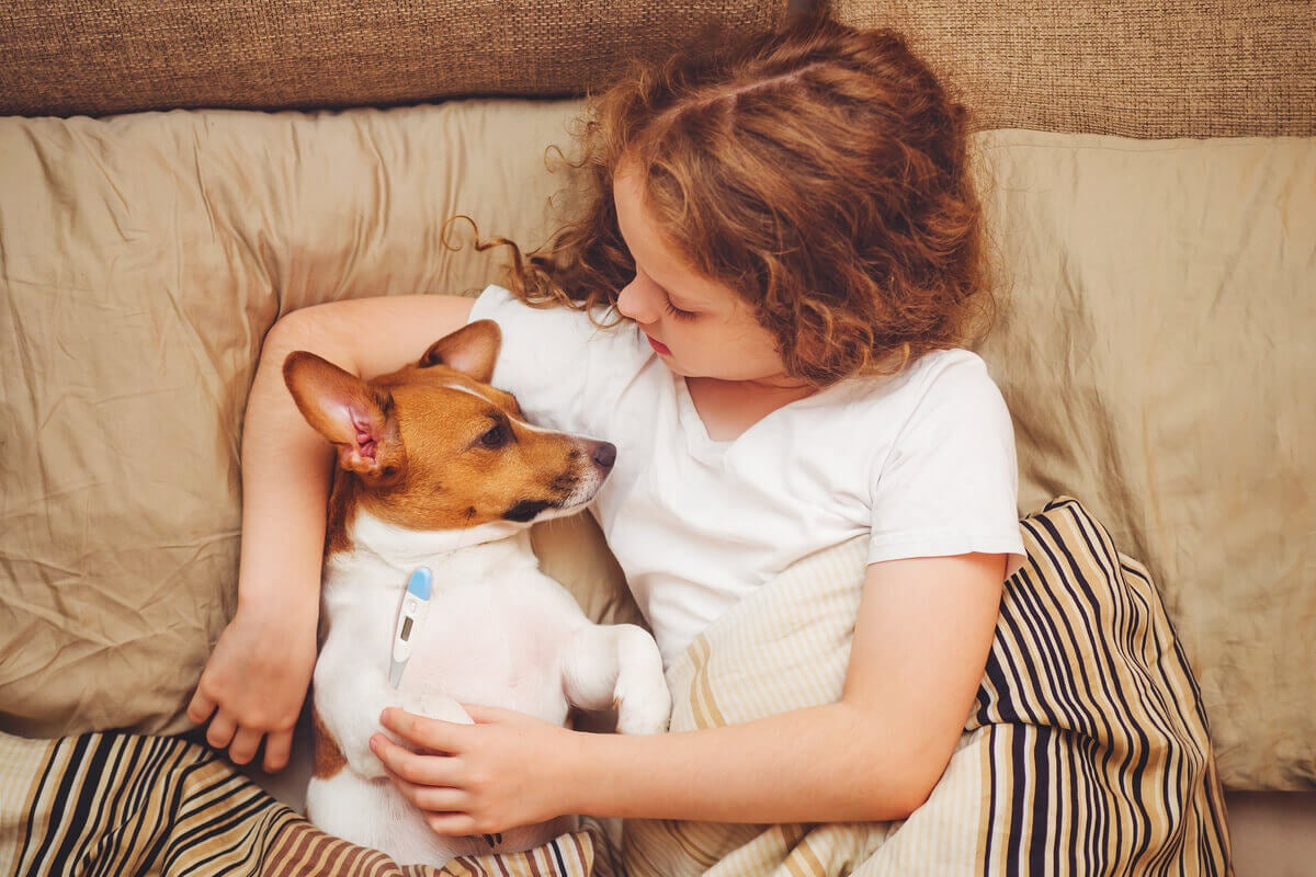 A young girl taking her dog's temperature with a digital thermometer.