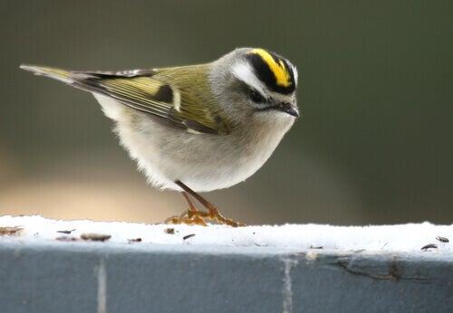 Small bird on ledge.