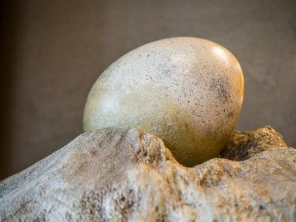 Dinosaur egg at the Jurassic Park of India.