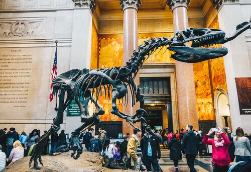 American Museum of Natural History.