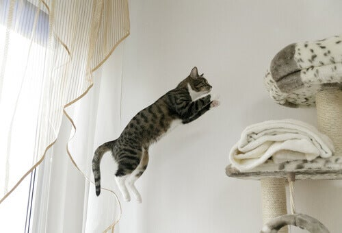 A cat jumping.