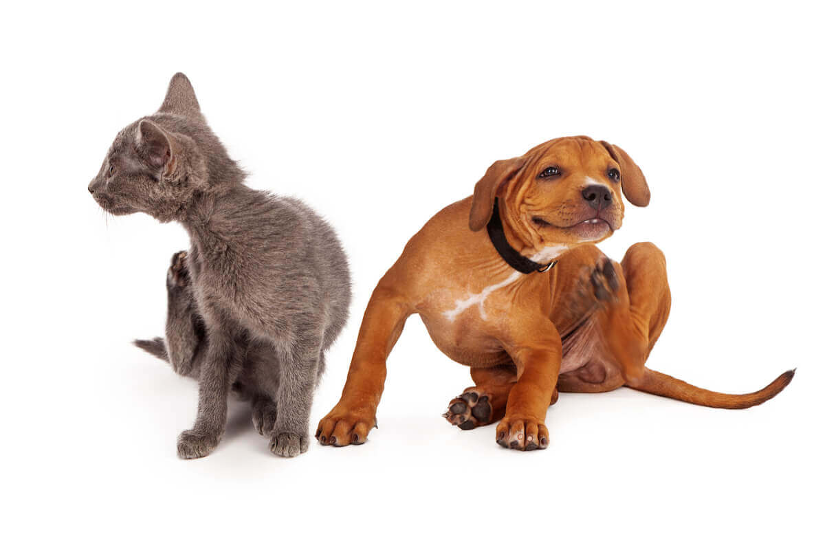 A Kittie and a puppy both scratching.